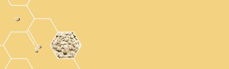 skin-solution-banner.png